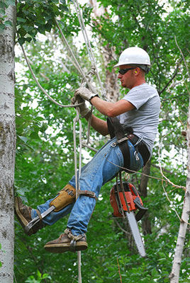 tree trimmer kerrville