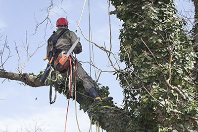 tree pruning kerrville