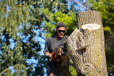 Bandera tree removal