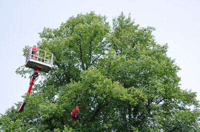 tree trimming kerrville tx