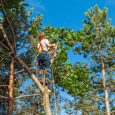 kerrville tree trimming
